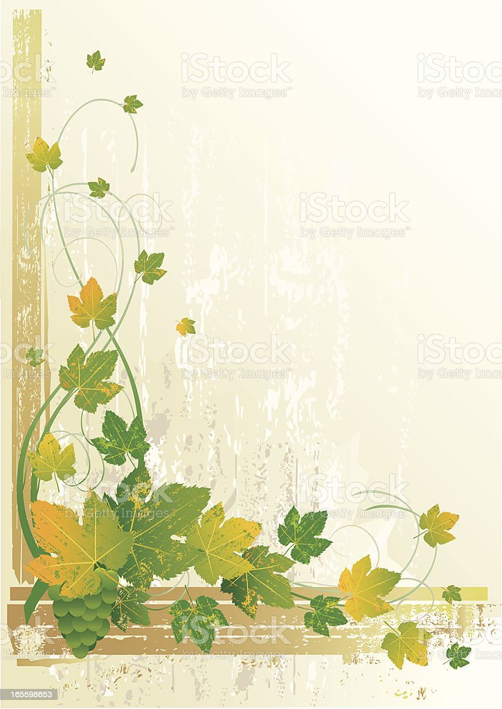 Vector Grunge Grapevine royalty-free stock vector art