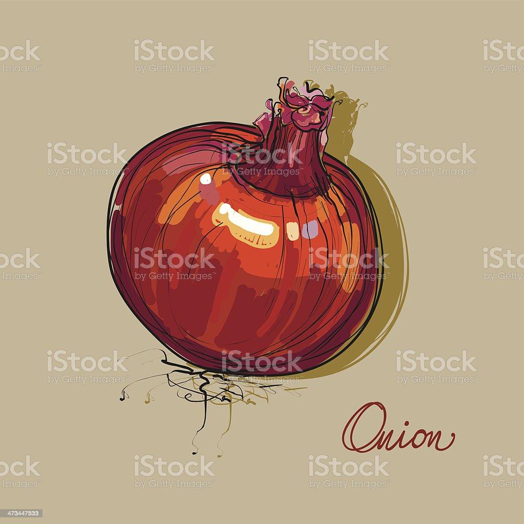 vector hand drawing onion vegetable vector art illustration