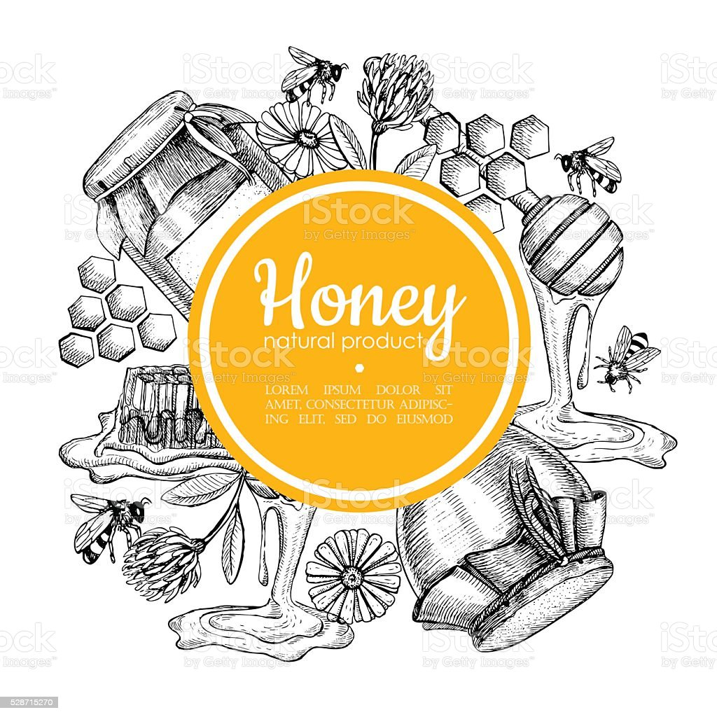 Vector hand drawn honey frame. Detailed engraved honey illustrat vector art illustration
