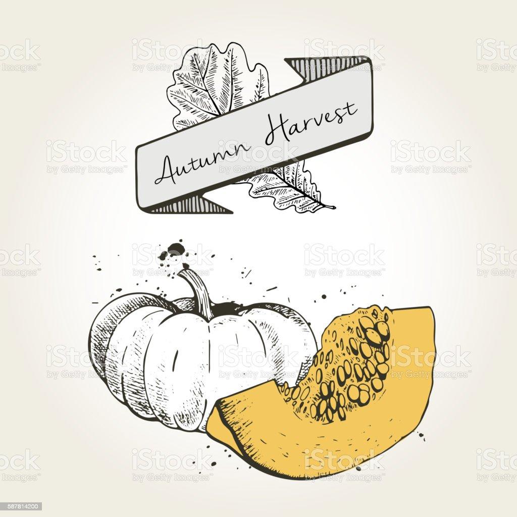 Vector hand drawn illustration of pumpkin slices. vector art illustration