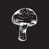 vector hand drawn ink illustration of mushroom from the forest