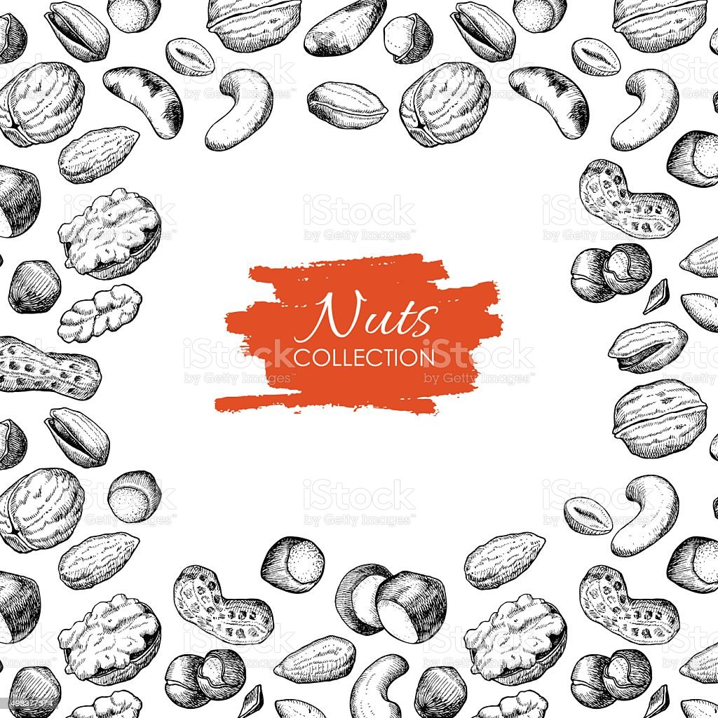 Vector hand drawn nuts illustration. Engraved. vector art illustration