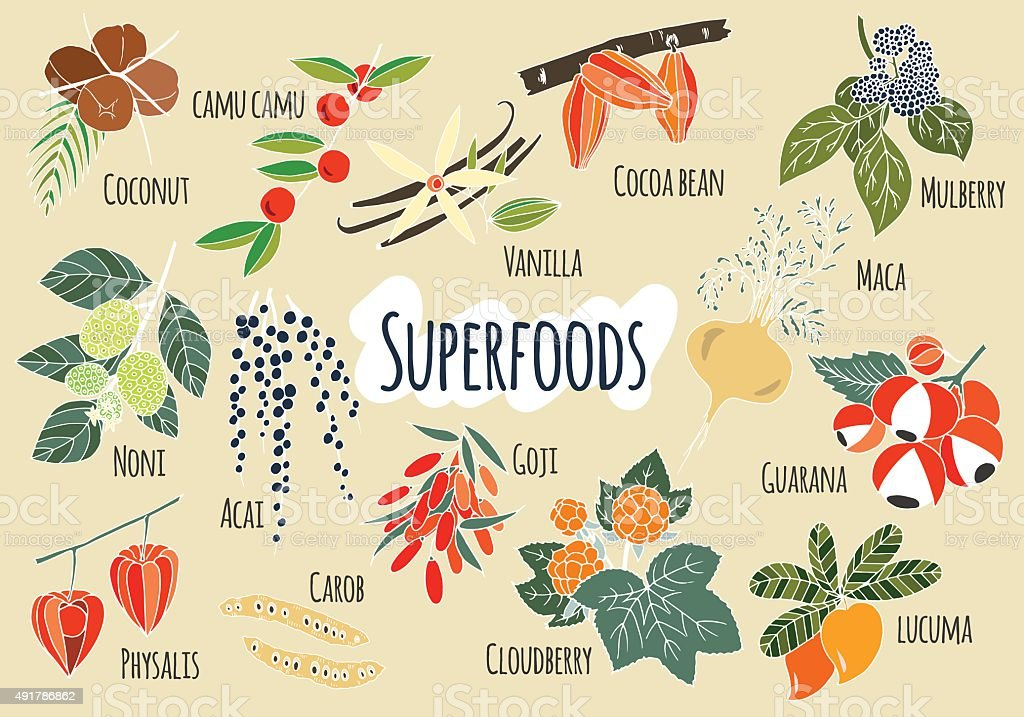 Vector hand drawn superfoods. vector art illustration