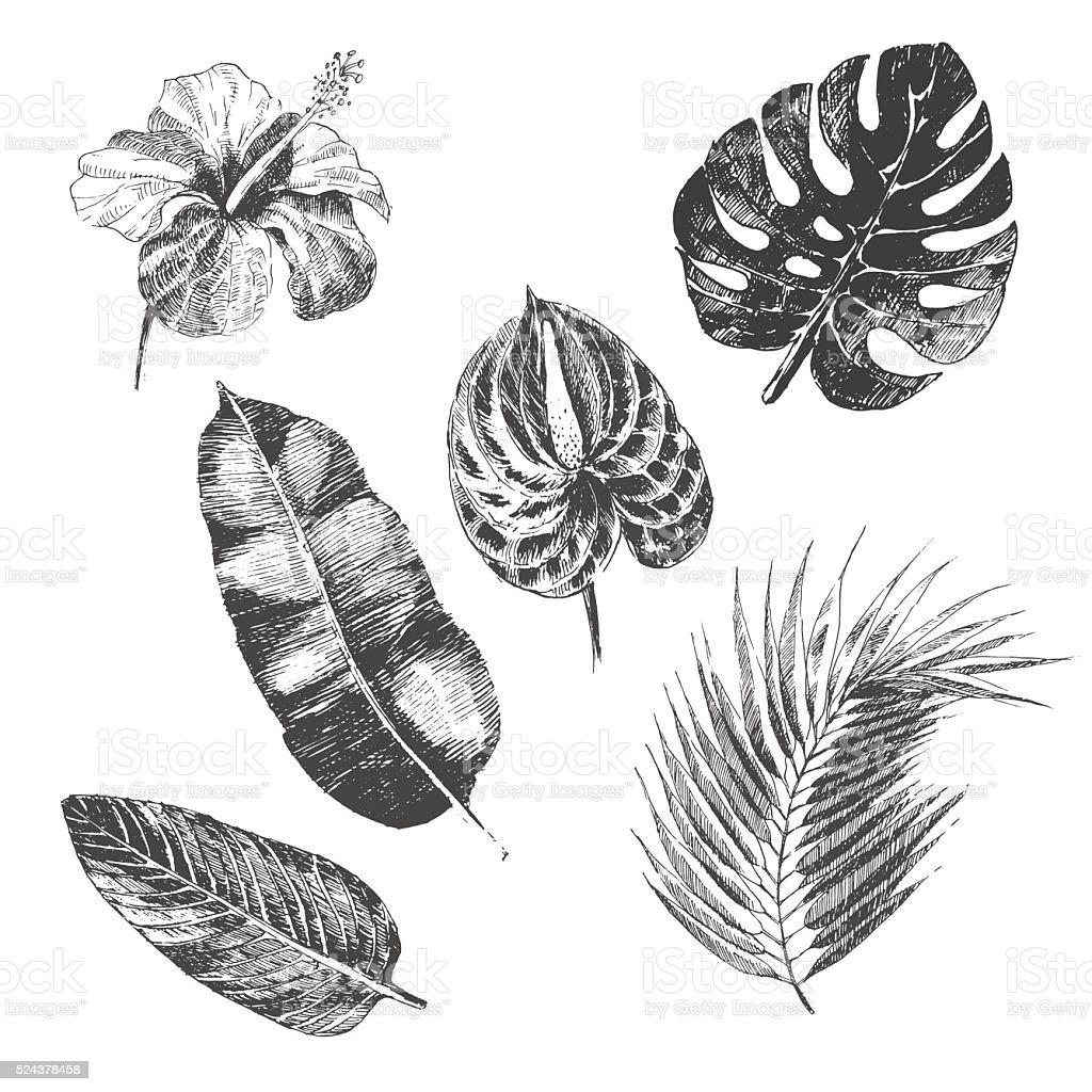 vector hand drawn tropical plants and exotic flower - palm vector art illustration