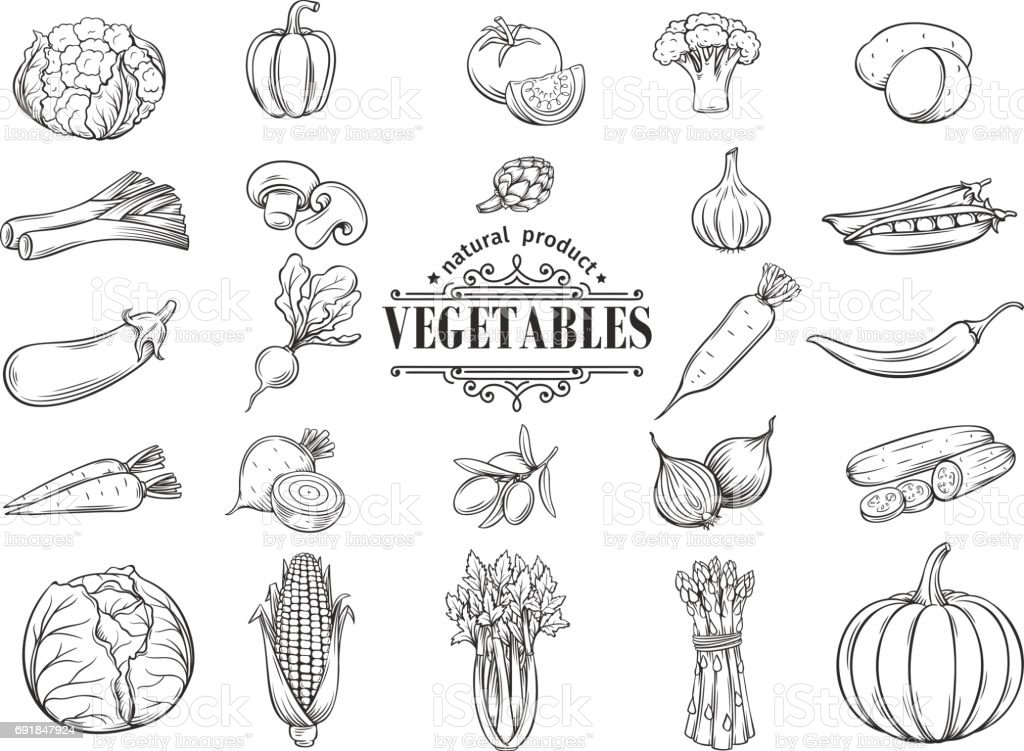 Vector hand drawn vegetables icons set. Decorative vector art illustration