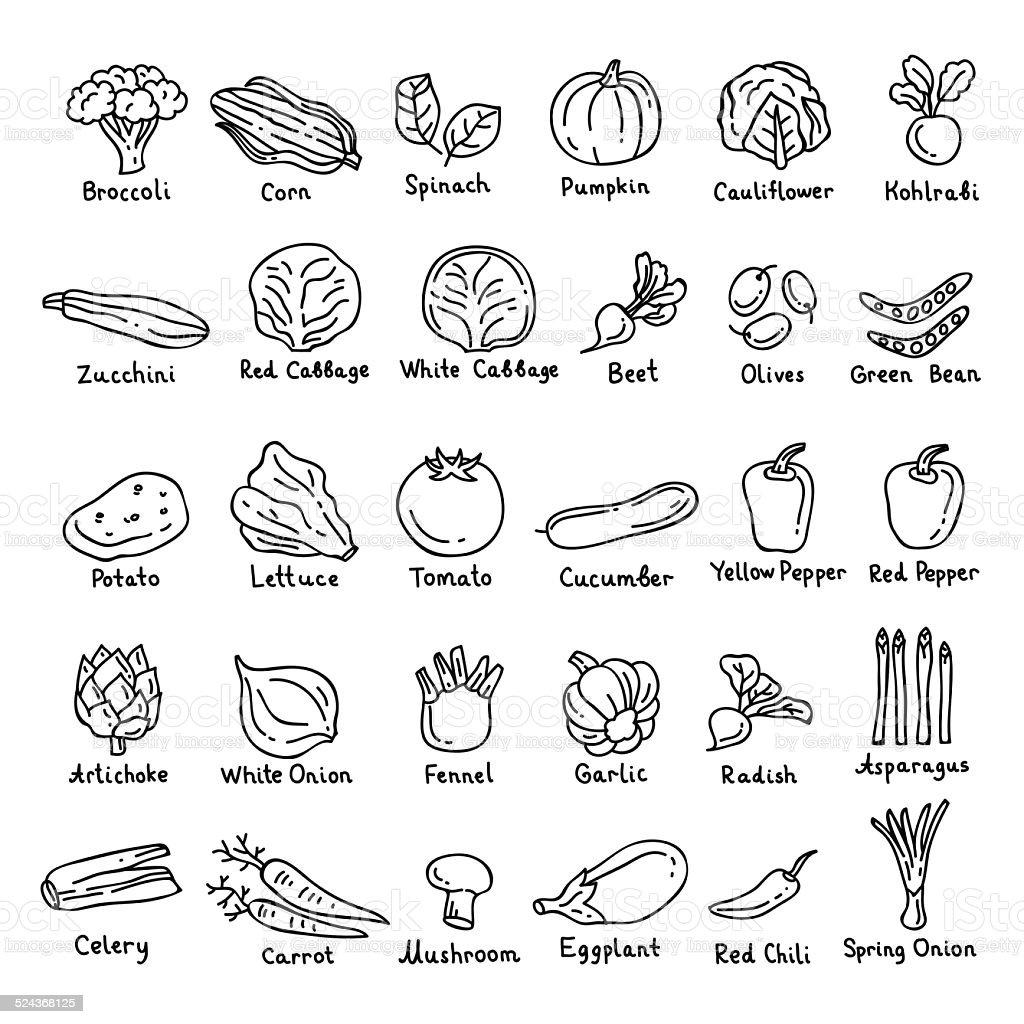 Vector hand drawn vegetables vector art illustration