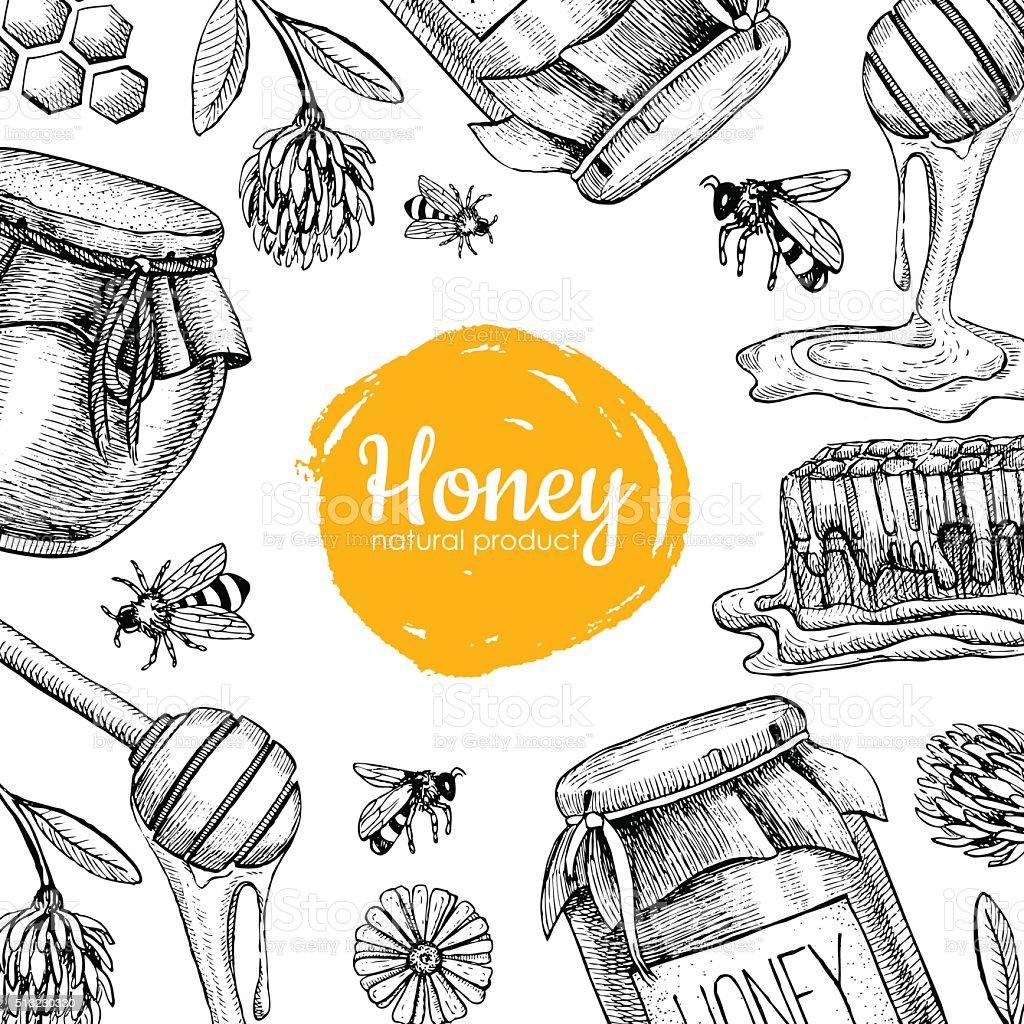 Vector honey bee hand drawn illustrations.  Honey banner, poster vector art illustration