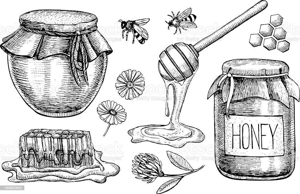 Vector honey set. Vintage hand drawn illustration vector art illustration