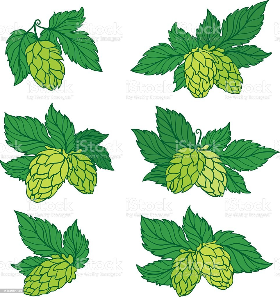Hops For Decoration Vector Hops Icons Stock Vector Art 610652798 Istock