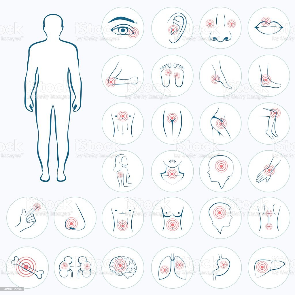 vector human anatomy vector art illustration