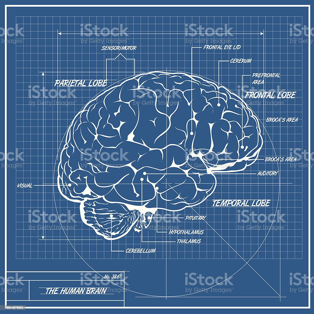 Vector Human Brain Blueprint vector art illustration