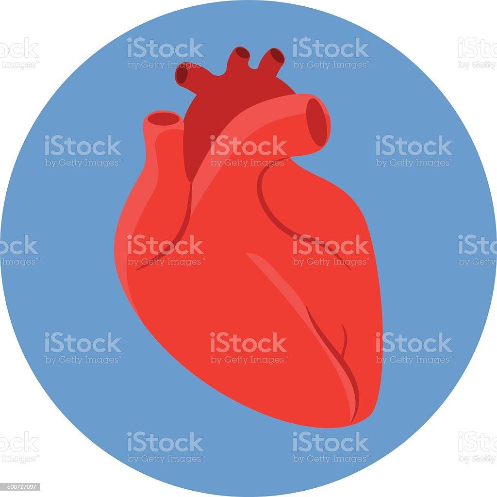 Vector Human  Heart -flat icon vector art illustration