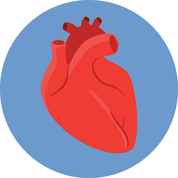 free clipart human heart - photo #40