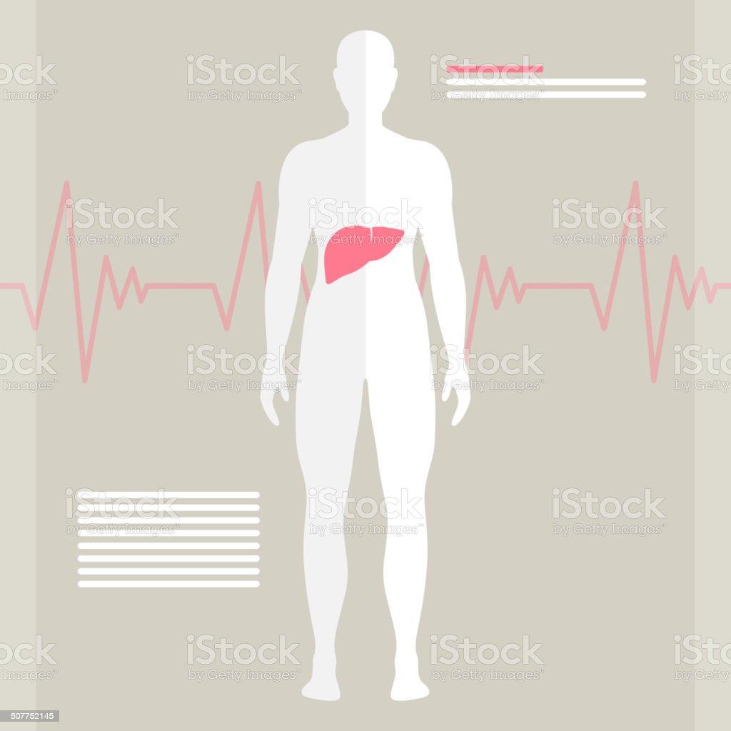 Vector Human Liver vector art illustration