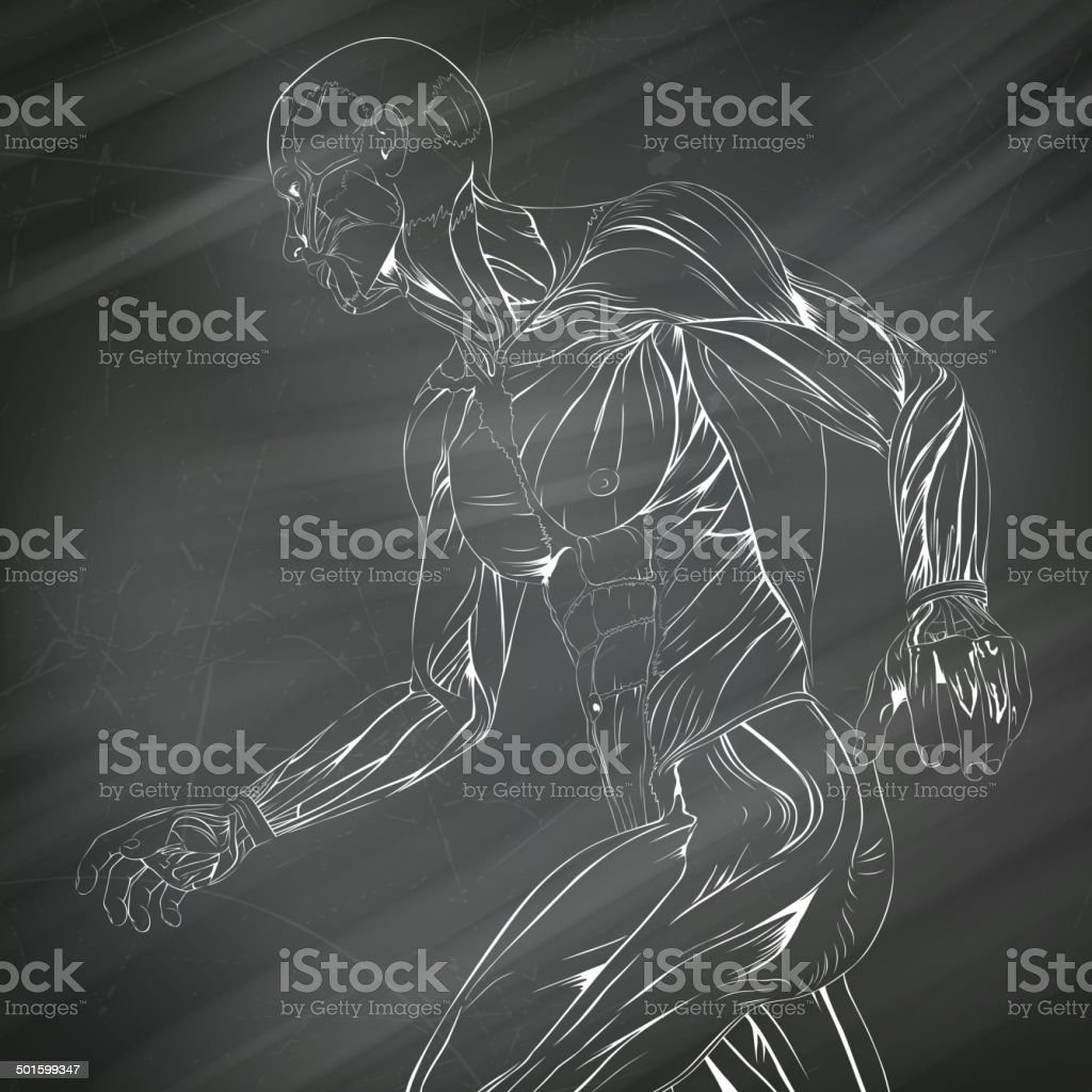 Vector Human Muscle Anatomy vector art illustration