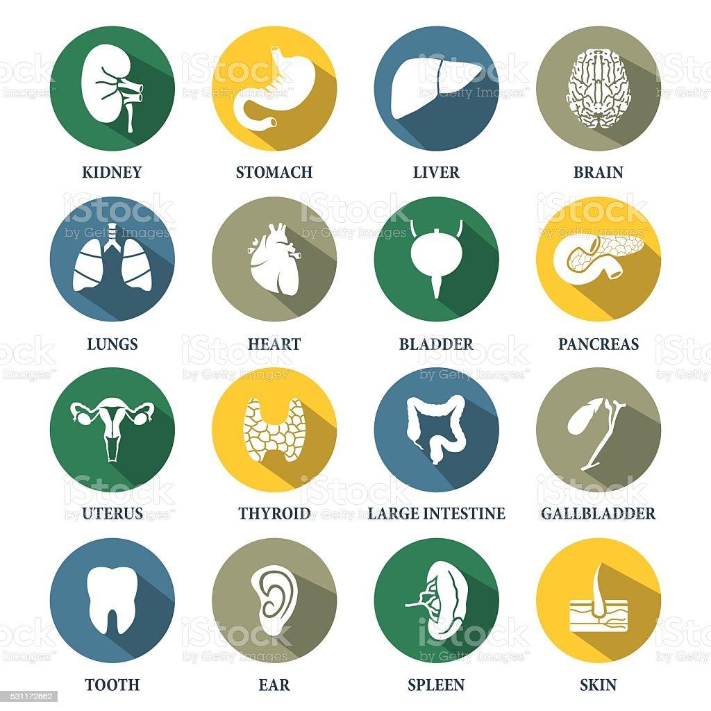 Vector human organs icons set.Vector symbols. Vector illustration vector art illustration