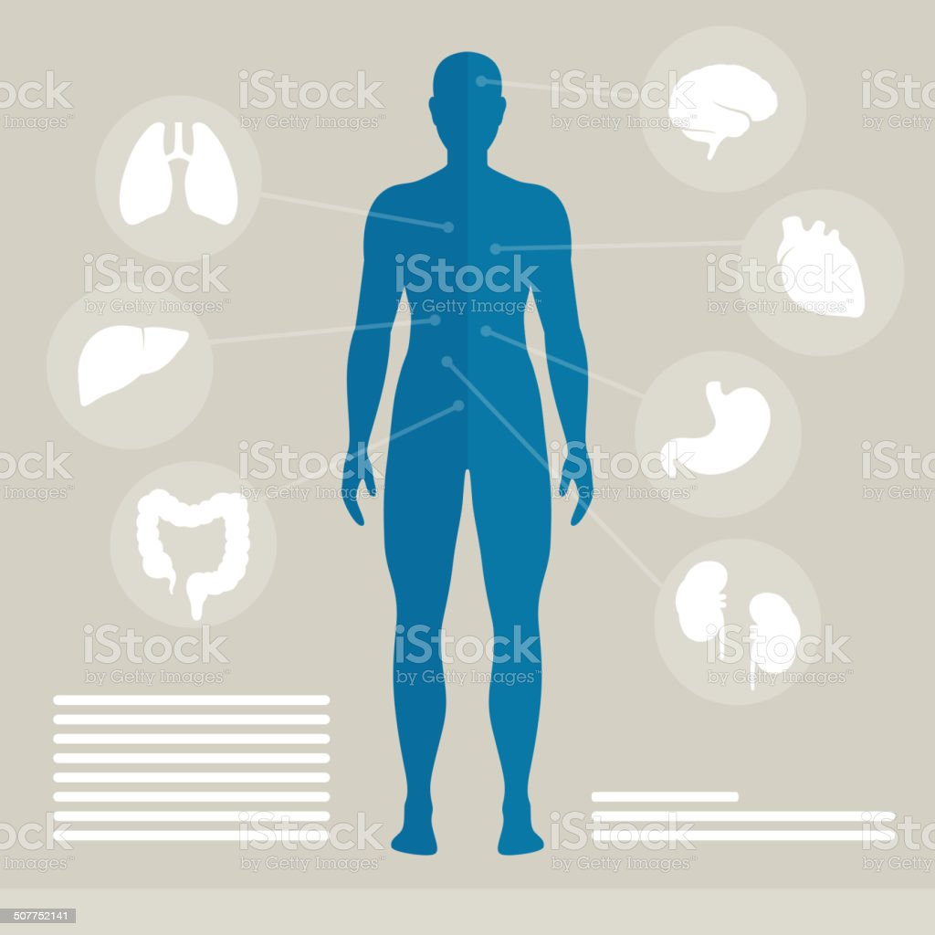 Vector Human Organs vector art illustration