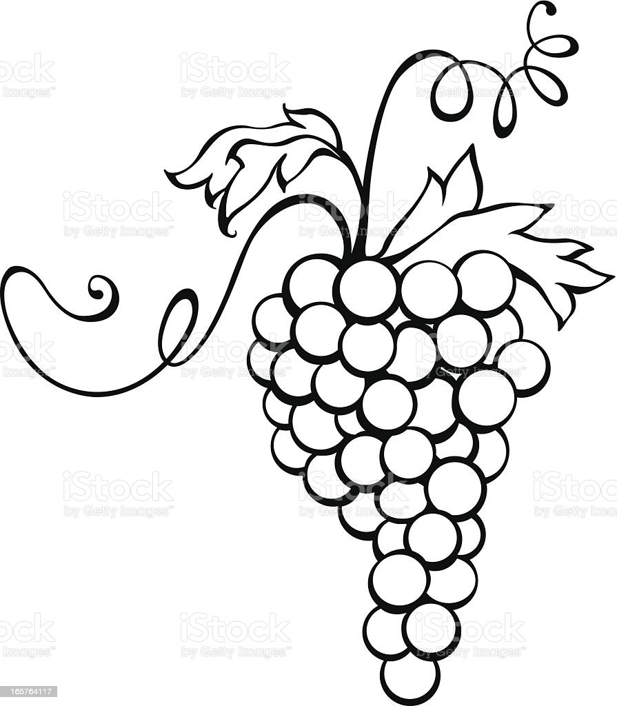 Vector Icon of Grapes Isolated on White Background. vector art illustration
