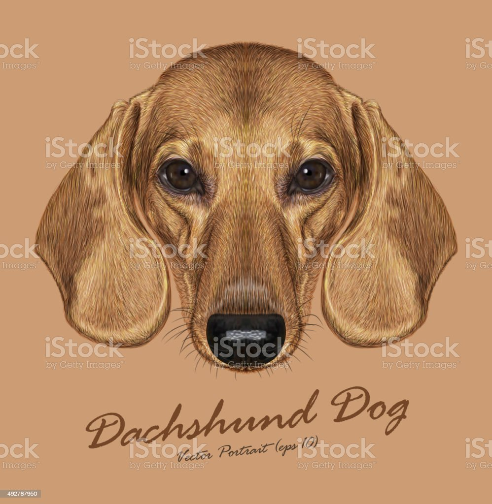 Vector Illustrated Portrait of Dachshund Dog vector art illustration