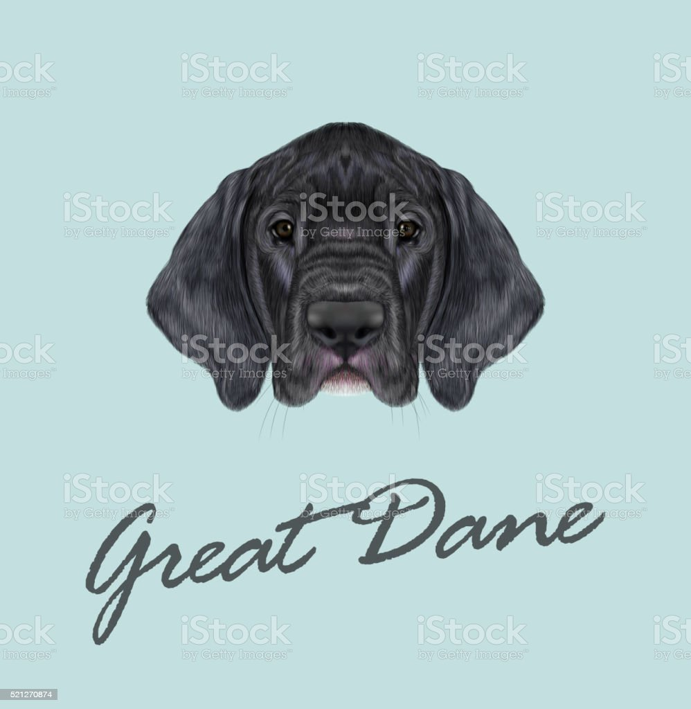 Vector Illustrated portrait of German Great Dane puppy. vector art illustration