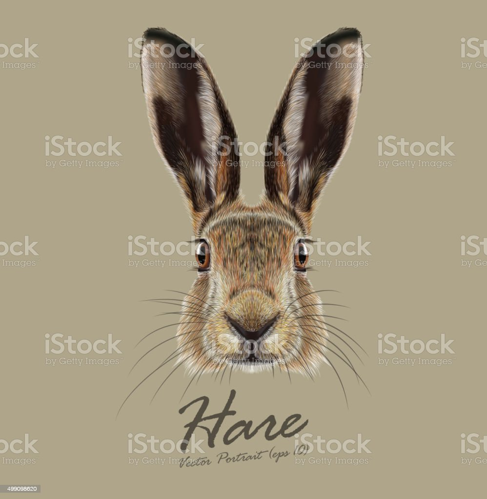 Vector Illustrated Portrait of Hare. vector art illustration
