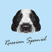 Vector Illustrated portrait of Russian Spaniel Puppy.