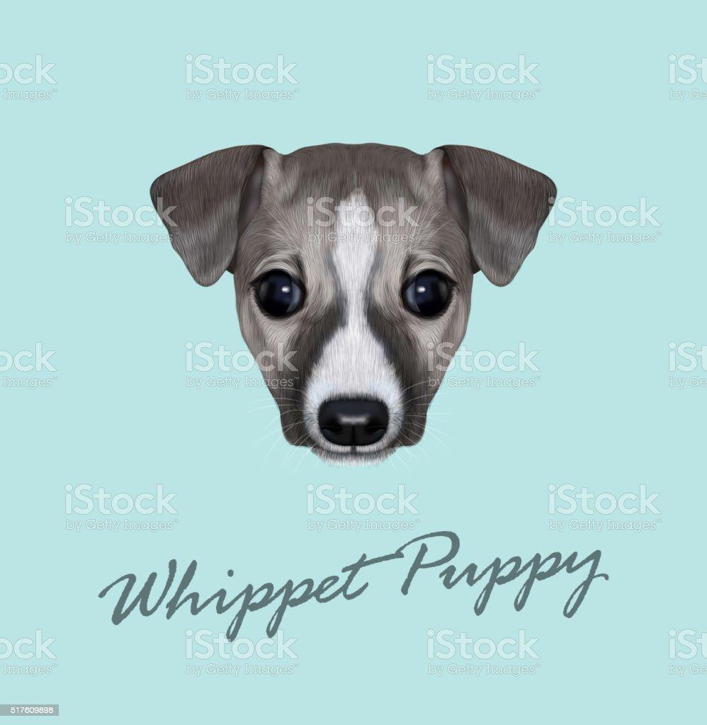 Vector Illustrated Portrait of Whippet puppy. vector art illustration