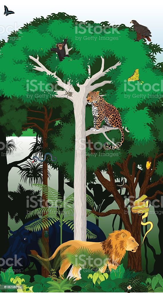 Vector Illustration african tropical jungle rainforest with animals vector art illustration
