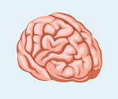 Vector illustration. Human brain.