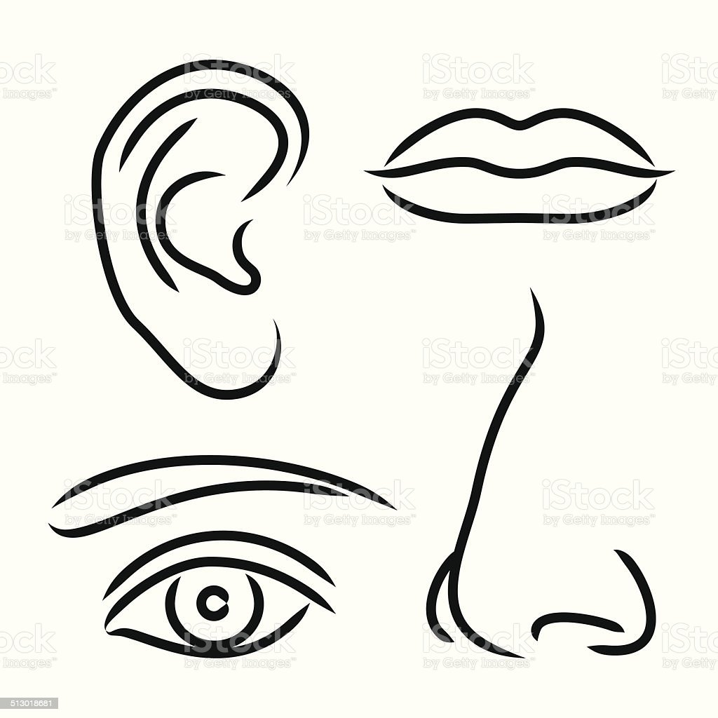 Vector illustration nose, ear, mouth and eye vector art illustration