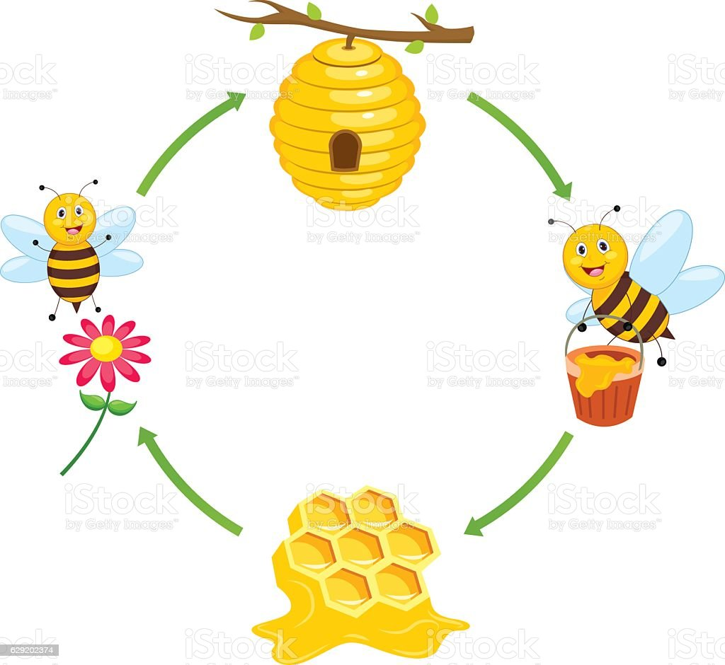 Vector Illustration of Bee Producing Honey vector art illustration