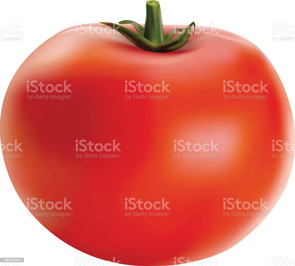 Vector illustration of big ripe red fresh tomato vector art illustration