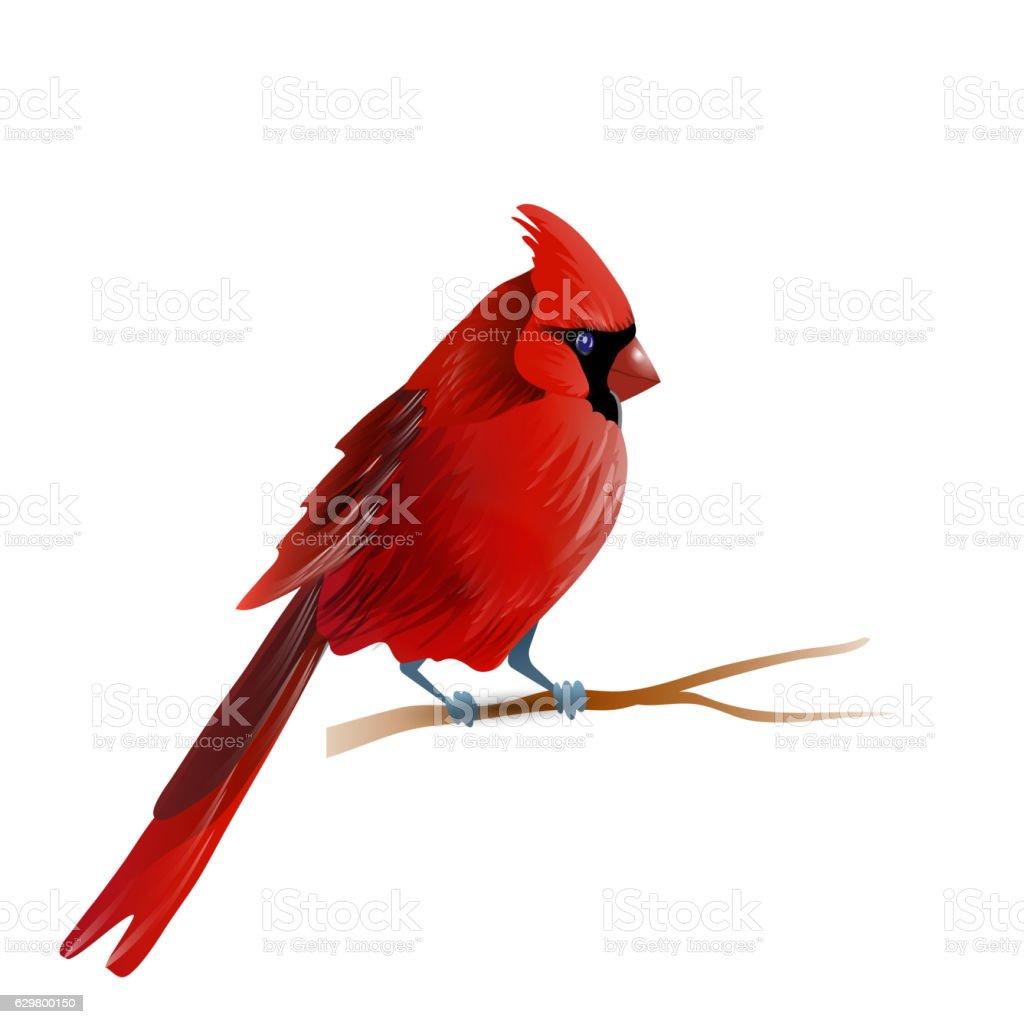 Vector illustration of cardinal vector art illustration