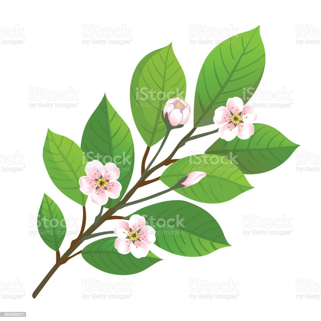 Vector illustration of cherry blossom. vector art illustration