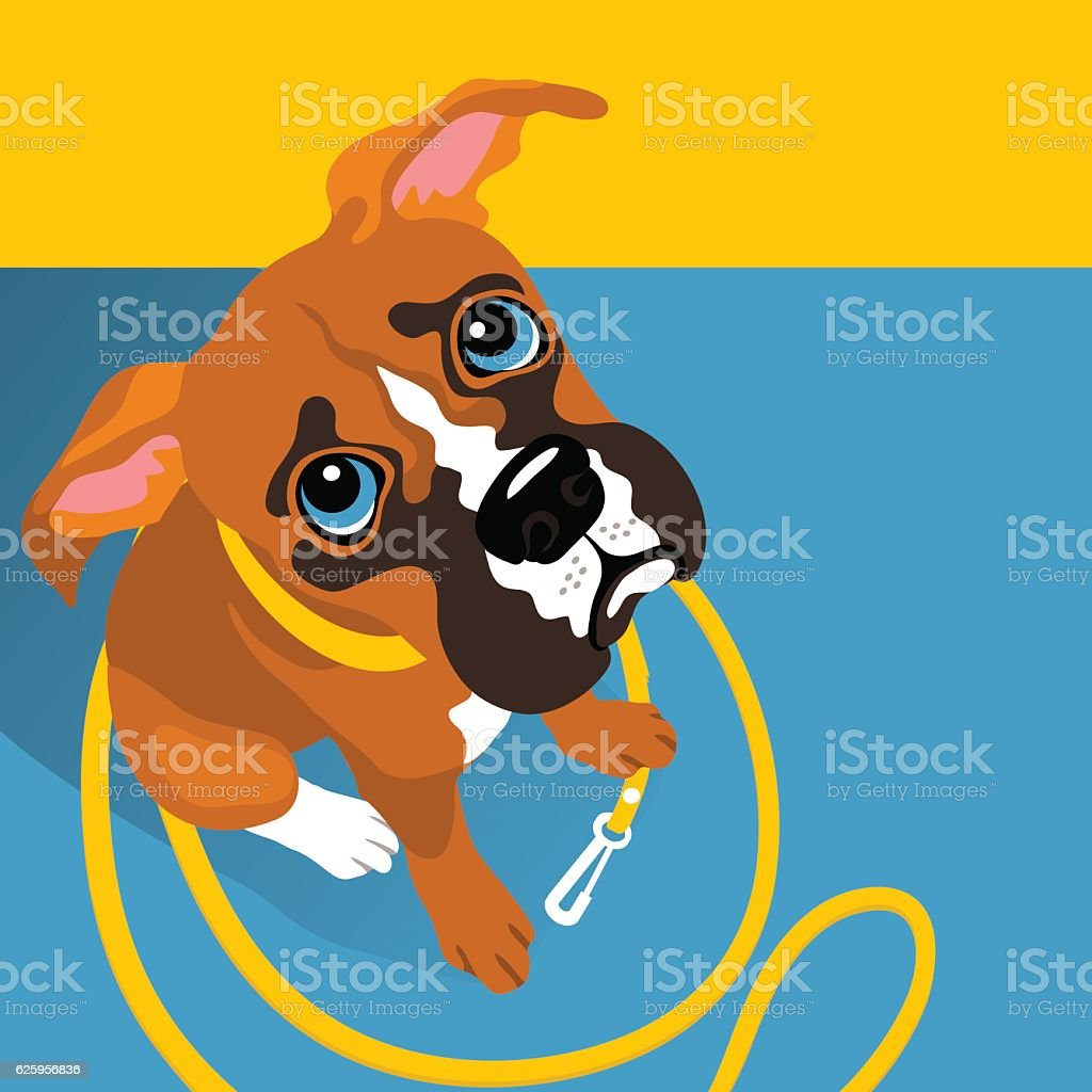 vector illustration of cute Boxer puppy with leash vector art illustration