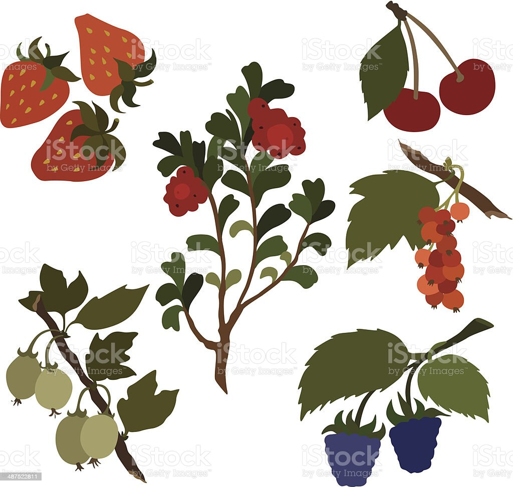 Vector illustration of different kinds of berries royalty-free stock vector art