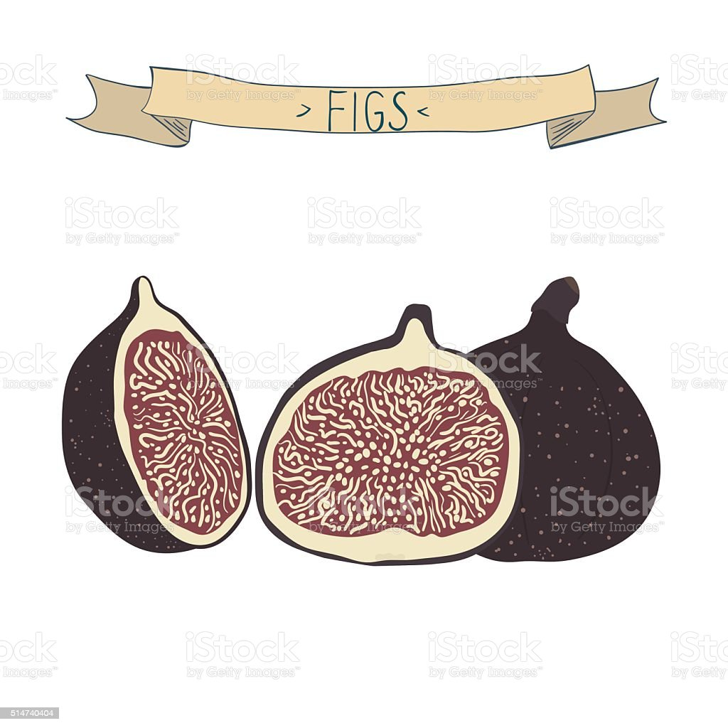 Vector illustration of figs. Hand drawn figs isolated on white vector art illustration