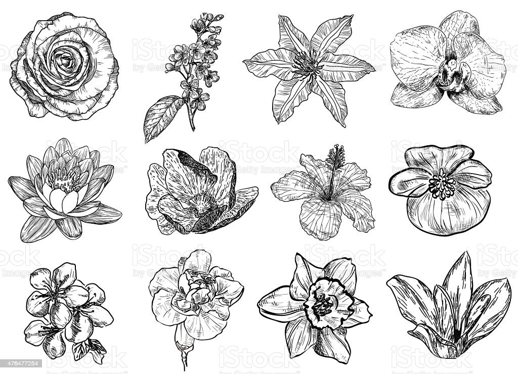 Vector illustration of flowers vector art illustration