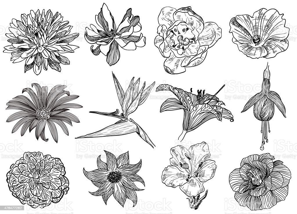 Vector illustration of flowers (black and white) vector art illustration