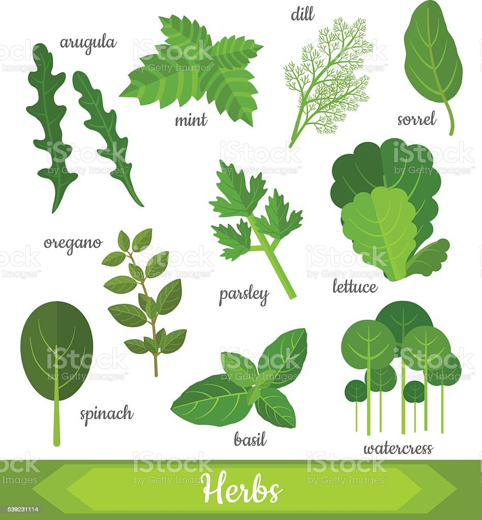 Vector illustration of fresh herbs vector art illustration