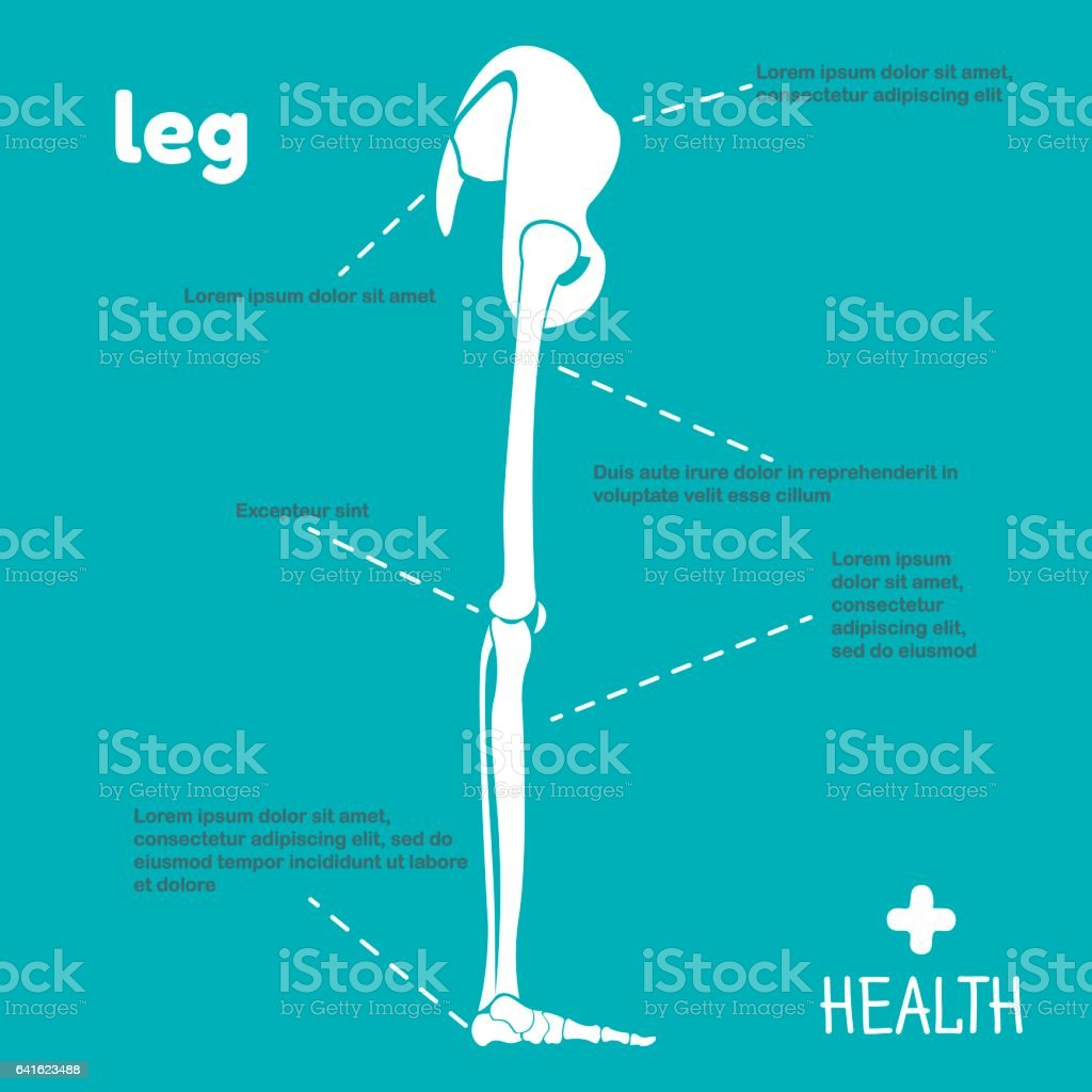 Vector illustration of grey leg vector art illustration