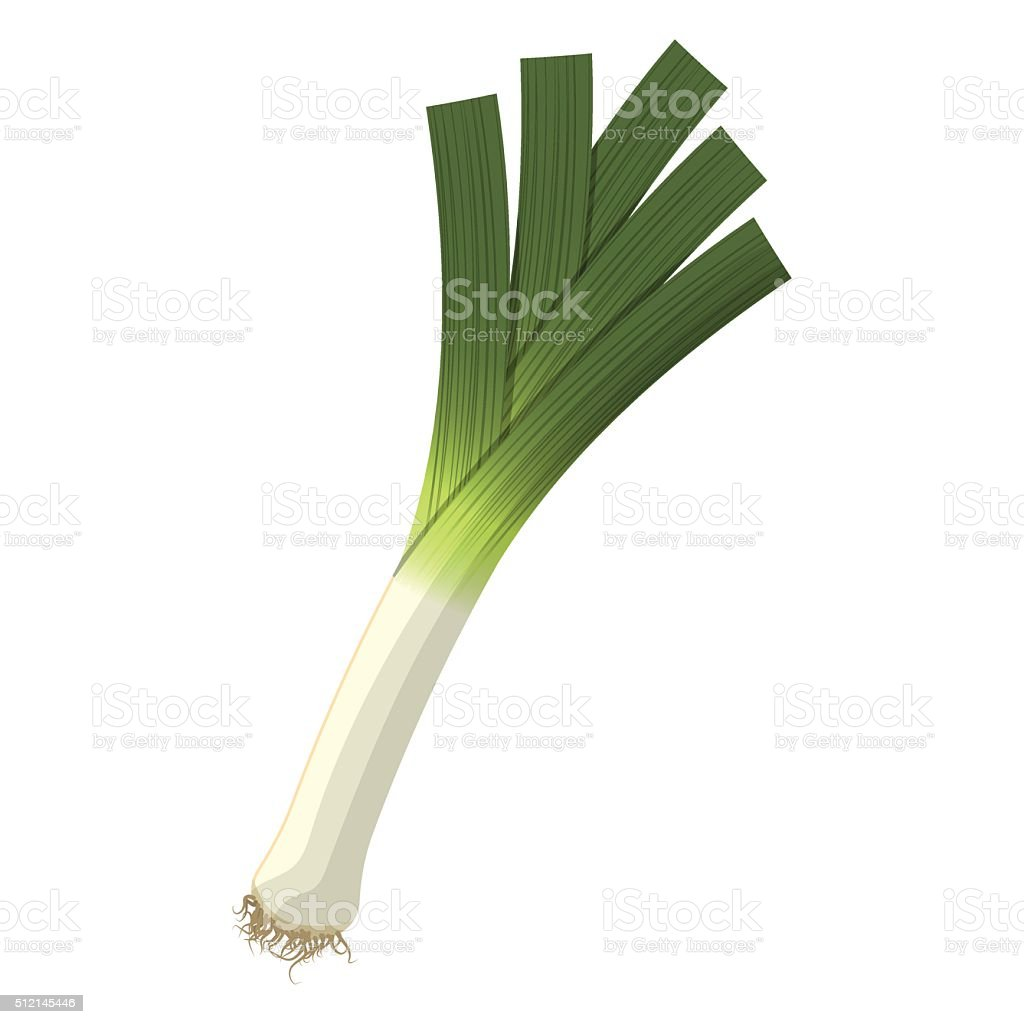 Vector illustration of  leek vector art illustration