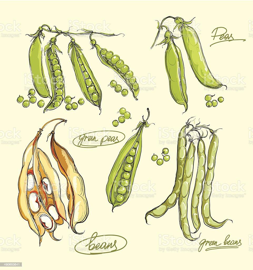 vector illustration of legumes set vector art illustration