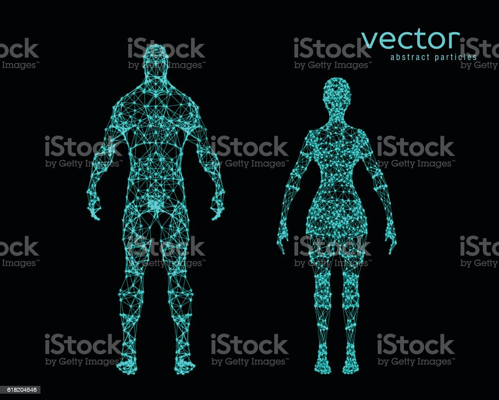 Vector illustration of male and female body vector art illustration