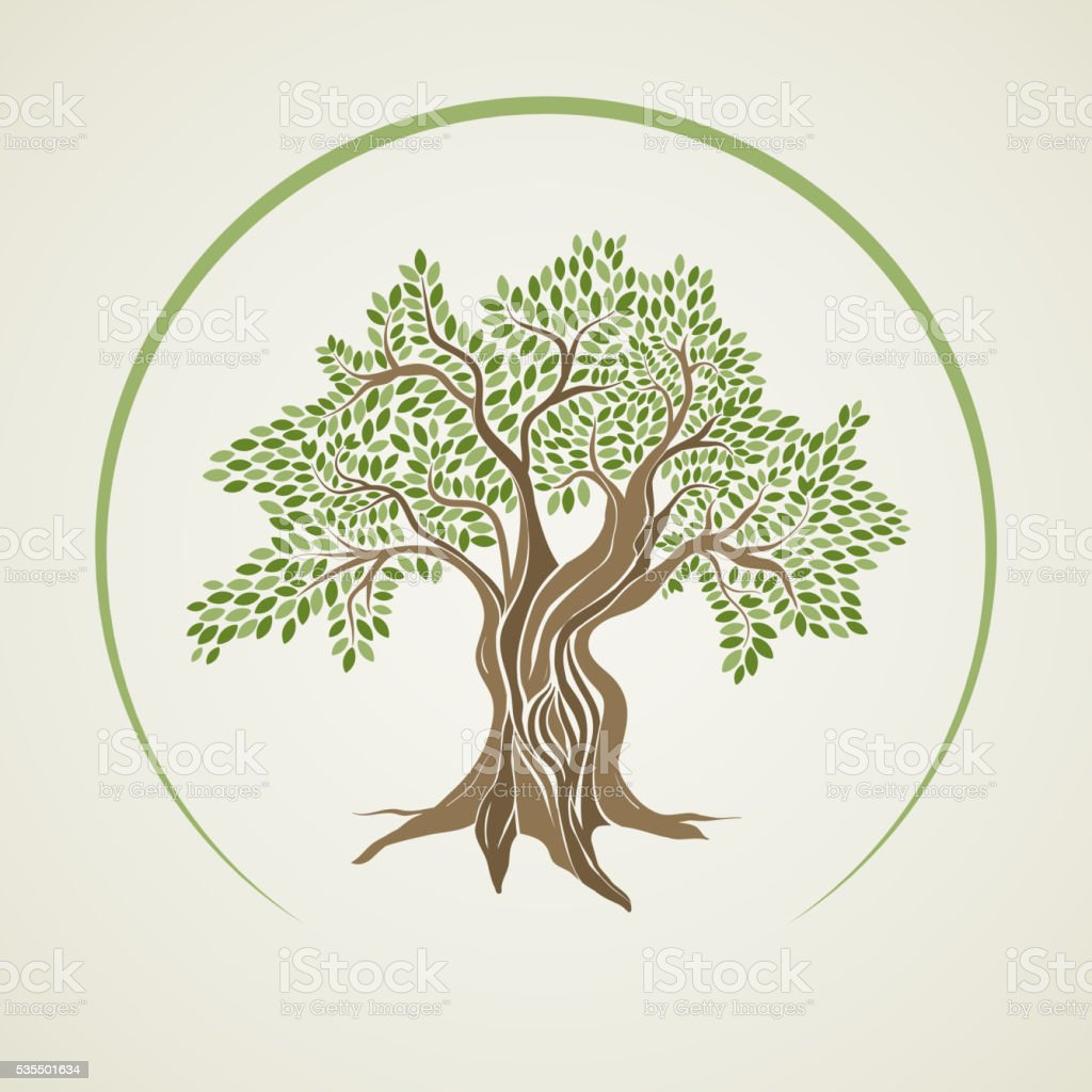 Vector illustration of olive tree vector art illustration