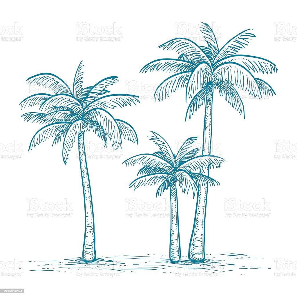Vector illustration of palm trees vector art illustration