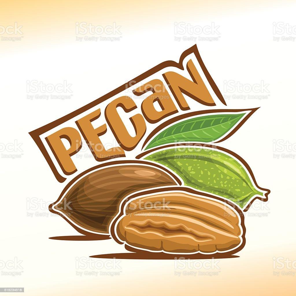 Vector illustration of pecan vector art illustration