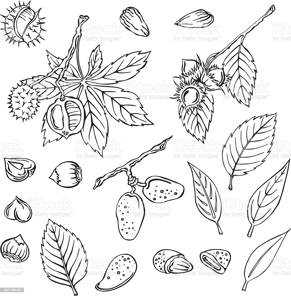 vector illustration of silhouettes of various nuts vector art illustration