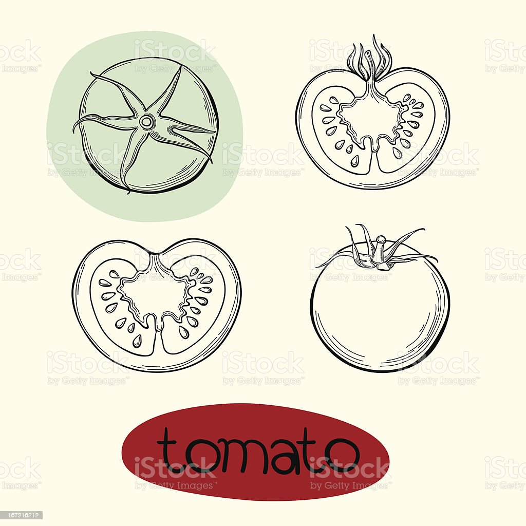 Vector illustration of tomato. royalty-free stock vector art