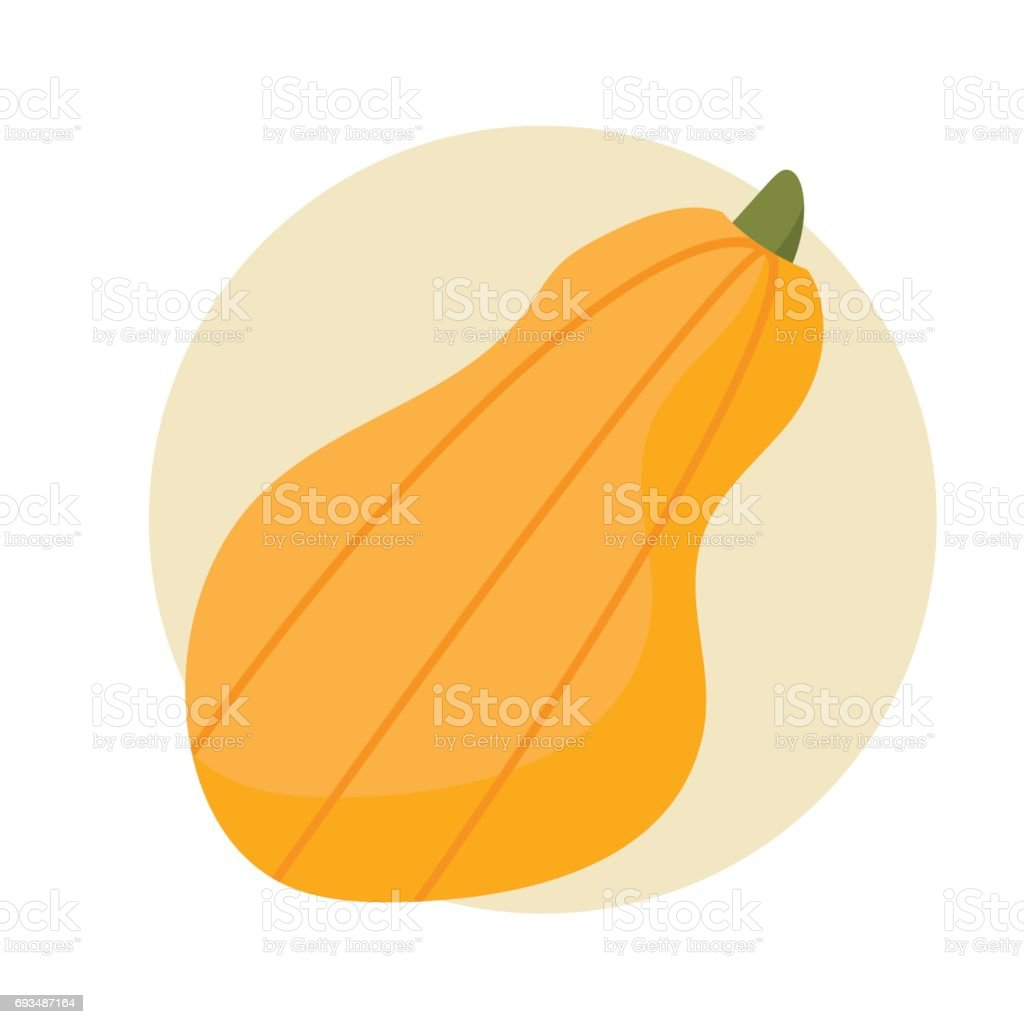 Vector illustration: orange long pumpkin isolated or butternut squash flat styled icon. vector art illustration